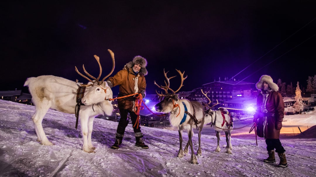 Polar Night Light Festival in Ruka Kuusamo Finland 2020 with reindeer from Kujala farm.